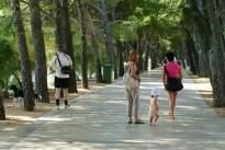 Bol: séta az Aranyszarv felé