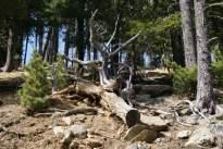 erdő: élet és elmúlás