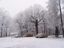Erdő szélén farakás